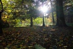11月太阳在很可爱的森林里 免版税库存照片