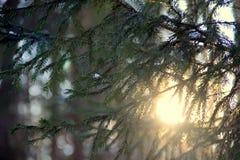 11月太阳 图库摄影