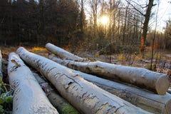 12月寒冷在森林 免版税库存图片