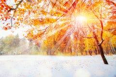 10月山有第一冬天雪的山毛榉森林, 免版税图库摄影