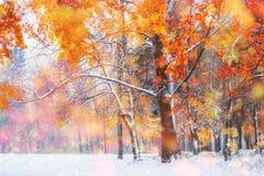10月山有第一冬天雪的山毛榉森林, 库存图片