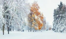 10月山有第一冬天雪的山毛榉森林 喀尔巴阡山脉 免版税库存图片