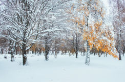 10月山有第一冬天雪的山毛榉森林 在anticip 库存照片