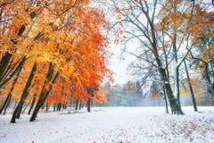 10月山有第一冬天雪的山毛榉森林 阳光b 免版税图库摄影