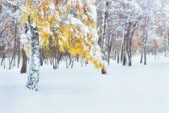 10月山有第一冬天雪的山毛榉森林 预期假日 库存照片
