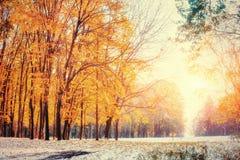 10月山有第一冬天雪的山毛榉森林 库存图片