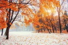 10月山有第一冬天雪的山毛榉森林 库存照片