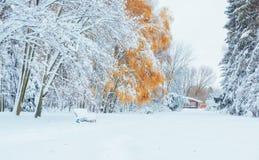 10月山有第一冬天雪的山毛榉森林 免版税库存照片