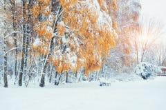 10月山有第一冬天雪的山毛榉森林 carpathians 乌克兰欧洲 免版税库存照片