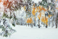 10月山有第一冬天雪的山毛榉森林 carpathians 乌克兰欧洲 免版税图库摄影