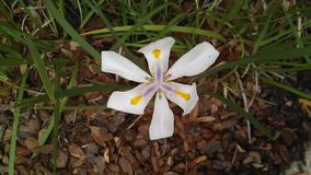 4月带来花可以阵雨 免版税图库摄影