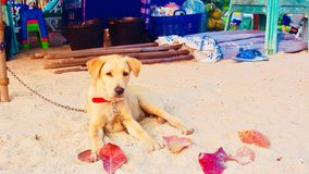 2月底海岛做发埃s海运射击泰国 图库摄影