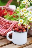 6月或7月与新鲜的被采摘的有机野草莓和春黄菊花的庭院场面在室外木的桌上 库存图片