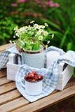 6月或7月与新鲜的被采摘的有机野草莓和春黄菊花的庭院场面在室外木的桌上 免版税库存照片