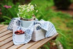 6月或7月与新鲜的被采摘的有机野草莓和春黄菊花的庭院场面在室外木的桌上 免版税图库摄影