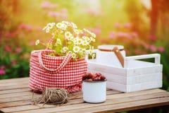 6月或7月与新鲜的被采摘的有机野草莓和春黄菊花的庭院场面在室外木的桌上 库存照片