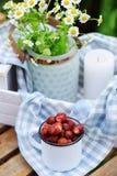 6月或7月与新鲜的被采摘的有机野草莓和春黄菊花的庭院场面 库存照片
