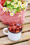 6月或7月庭院场面用新鲜的摘的有机野草莓 免版税库存图片