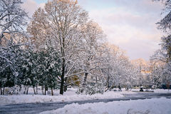 11月日出在城市公园 免版税库存图片