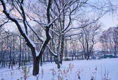 11月日落在城市公园 免版税库存照片