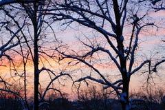 11月日落在城市公园 库存图片