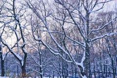11月日落在城市公园 免版税库存图片