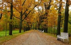 10月早晨在凯瑟琳公园在Tsarskoe Selo 免版税库存照片
