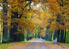 10月早晨在凯瑟琳公园在Tsarskoe Selo 免版税图库摄影