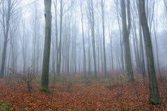 11月早晨有薄雾的森林 免版税库存照片
