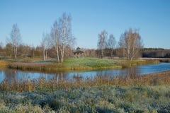 10月早晨霜在Petrovskoe 血污的Pushkinskie,俄罗斯 免版税图库摄影