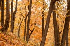 10月时间的槭树公园 免版税库存照片