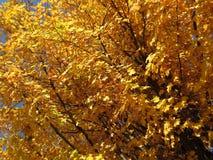 11月最后的秋叶  免版税库存图片