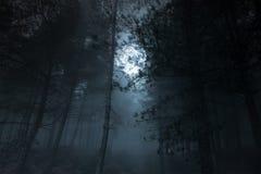 满月松林 免版税库存图片