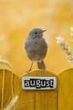 8月栖息的鸟装饰了篱芭 免版税图库摄影