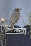 11月栖息的鸟装饰了篱芭 库存照片