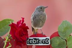 2月栖息的鸟装饰了篱芭 免版税库存照片