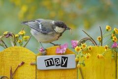 5月栖息的鸟装饰了篱芭 图库摄影