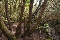月桂树森林 库存图片