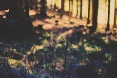 12月森林 库存图片