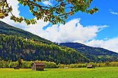 5月樱桃树春天草甸阿尔卑斯奥地利 免版税库存图片