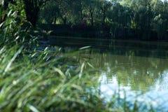9月池塘的风景在一个晴天 库存照片