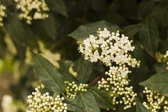 3月的白色春天 免版税库存照片