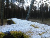 11月的第一雪 库存照片