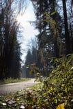 11月秋天冷杉森林 库存图片