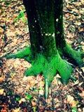 10月秋天和树干绿色 库存图片
