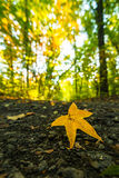 10月秋天风景在遥远的山区在特兰西瓦尼亚 免版税库存照片