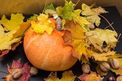 10月自然概念用南瓜、核桃和秋叶 免版税库存照片