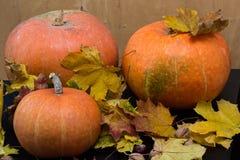 10月自然概念用南瓜、核桃和秋叶 免版税图库摄影