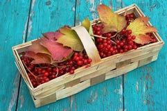 10月莓果 库存图片