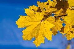 10月蓝色5 免版税图库摄影